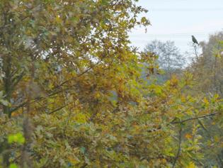 Natur bei Höltigbaum und Braak
